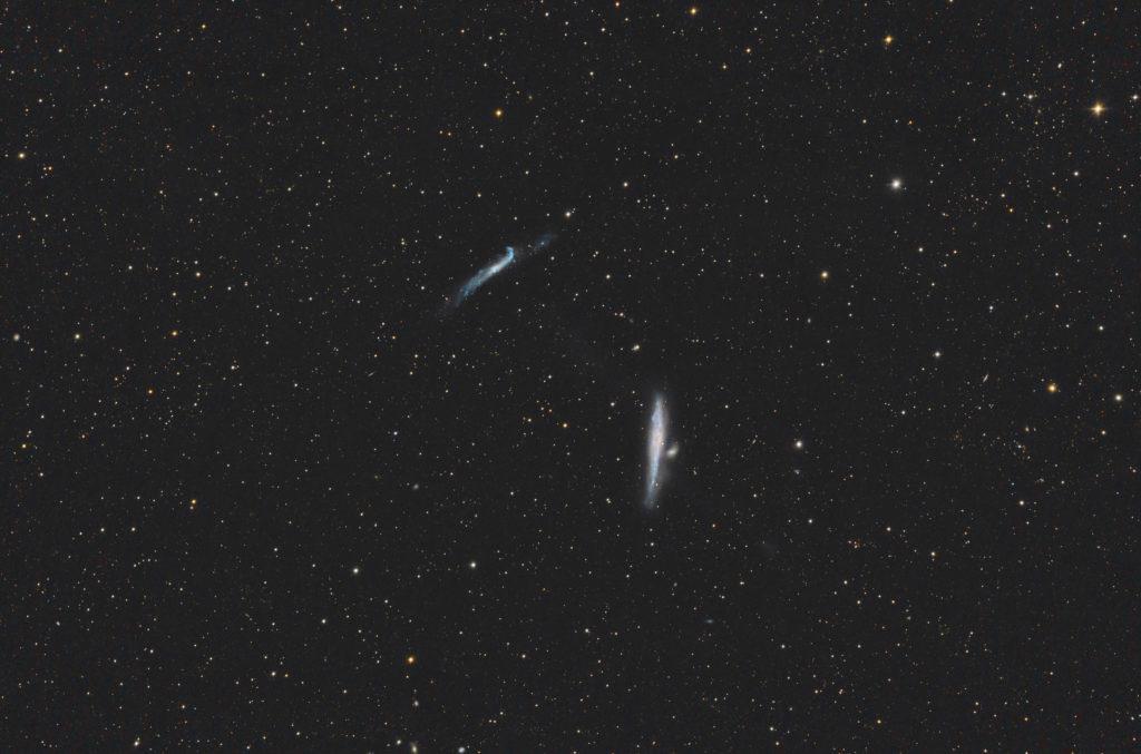 NGC4631, NGC4656 aufgenommen mit RASA 36 f2.2 - Christoph Kaltseis